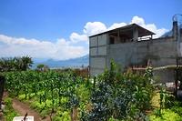 Guatemalteekse landbouw