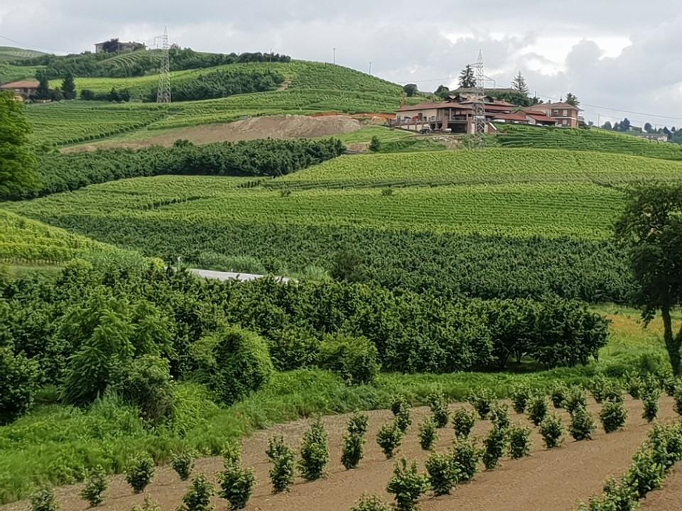 Een van de vele wijngaarden