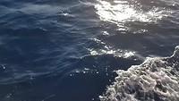 Dolfijnen langs onze boot