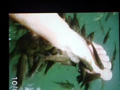 Vissenvoer