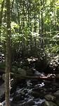 Bij de Roaring Fork Motor Nature Trail