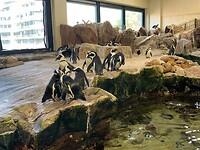 Pinguïns kijken