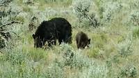 Moeder-beer met 2 welpjes!!