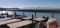 Zeeleeuwen, SS Jeremiah O'Brien, Golden Gate