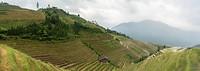 rijstvelden van ping an