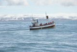 ook op zoek naar walvissen