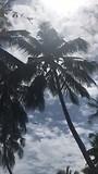 hoe kokosbloemensap wordt verzameld