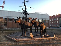 Houten elandenfamilie