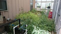 Testen van planten in een gesloten systeem