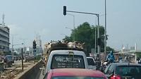 Hoe vervoer je geiten?