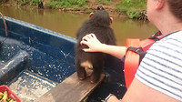 Chimpanzee in boat