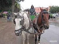 Reizen per Caleche in Marrakech