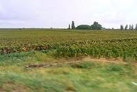 We rijden door de Bourgogne wijnstreek