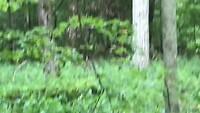 Bialowieza National Park vogeltje