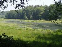 2021-06-04 0948 Vennetje midden in het bos