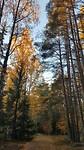 De herfstkleuren in Totra