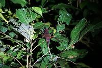 'Wildlife' tijdens de nachtwandeling