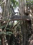Bruggetje door een boom
