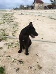 Lief hondje op t strand