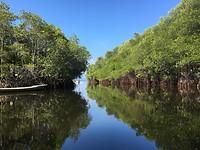 Mangrove boottochtje