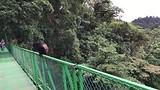 Howler monkey op de brug (brulaap)