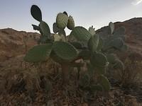 Cactussen worden hier groot hoor