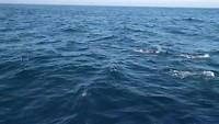 short impression of the sea