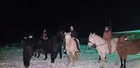 Nadat de paarden waren ontsnapt