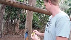 Billabong Sanctuary, Cassowary voeren