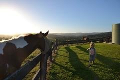 Lorne - Kijken bij de paarden