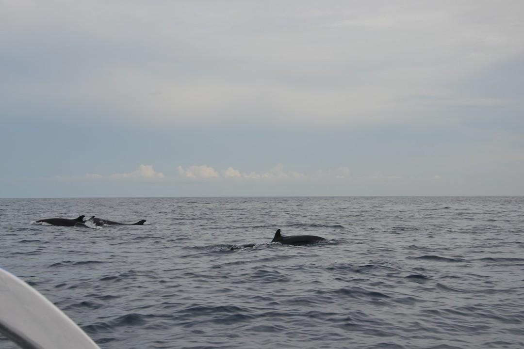 Lovina - dolfijnen spotten