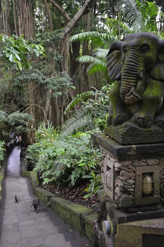 Monkey forest, beeld