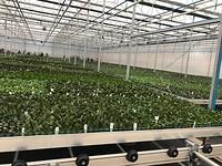 week 8: nieuwe tuin Floricultura
