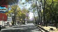 Jacaranda in de stad