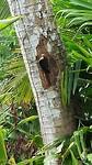 Woody wood pecker 😅