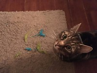 Dexter samen met het speelgoed wat hij van Wilma heeft gekregen.