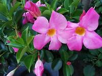 Mooie bloemen in de tuin bij Cor en Marjon.