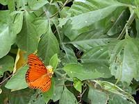 Richard is in Tayronapark op vlinderjacht gegaan, er waren hele mooie bij.