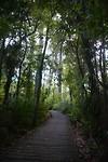 Manuka Forest
