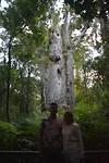 Op een na grootste Manuka boom