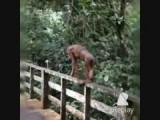 Samenvatting van onze ontmoeting met de Orang oetangs