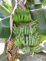 Bananen tuin hotel Bonito
