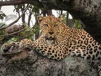 13. Kruger NP