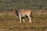 27. Addo NP