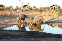 45. Elephants Sands