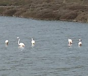 Flamingo's 🦩