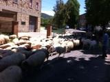 even geduld overstekende schapen
