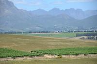Wijngaarden in de buurt van Stellenbosch