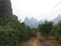 Wandelen tussen de fruitbomen