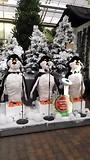 zingende pinguins